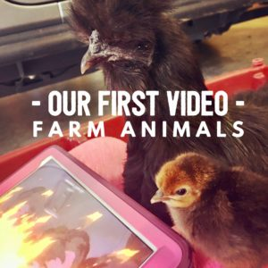 Our First Video - Farm Animals